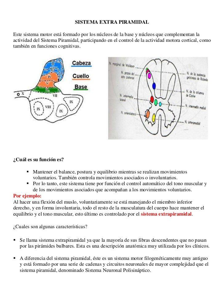 Sistema Parasimpáticos (Cráneo-Sacral)</li></ul><br />Vías Eferentes Somáticas:<br /><ul><li>Estas vías controlan la musc...