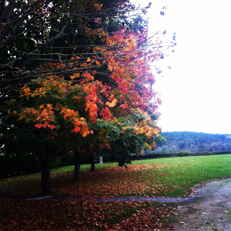 Autumn foliage on the grounds of a graveyard in County Wexford,Ireland. Taken my me :)
