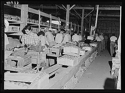 Kings-Creek-Packing-Company-Somerset-County-Kings-Creek-Maryland-MD-1940-FSA
