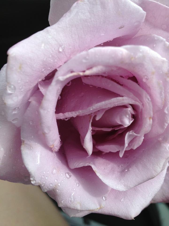 Dayas Rose