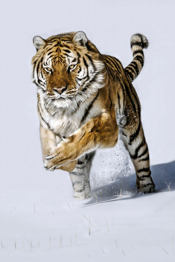 Snow Chase. by Paul Keates