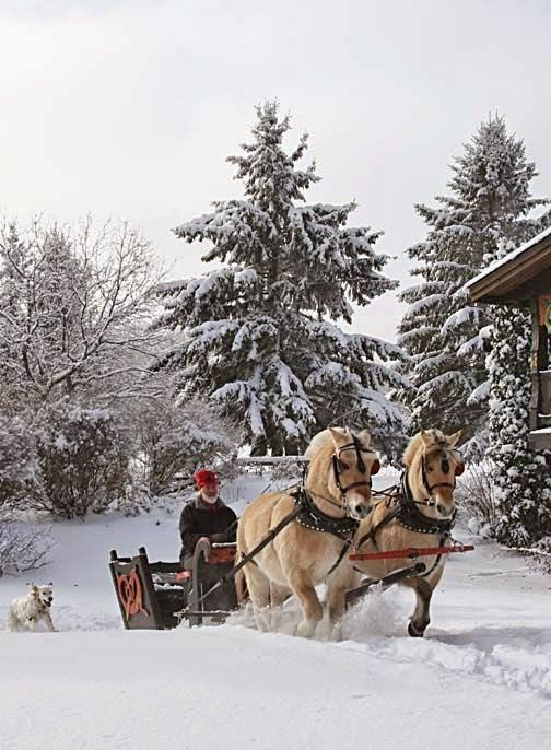 a joyful winter Christmas .. X ღɱɧღ    Totaly Outdoors: I love Dashing Through The Snow.