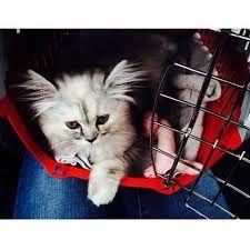 Résultats de recherche d'images pour « emma verde chaton »