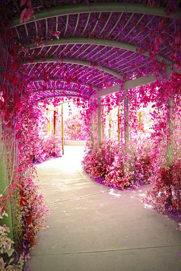 flower tunnel*o*