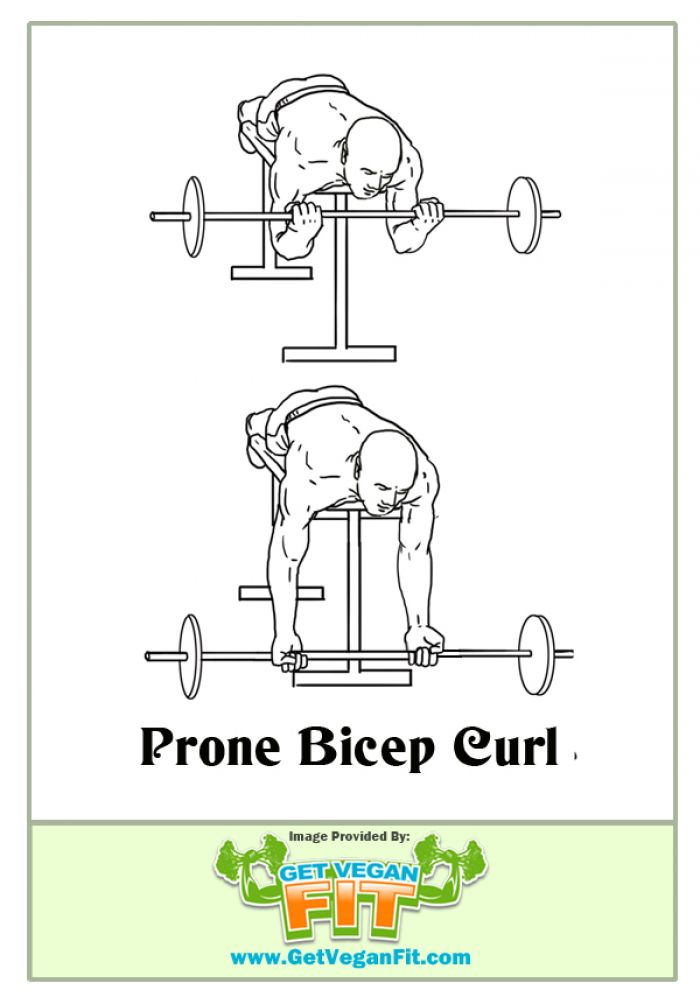 Prone Bicep Curl Arm Exercise Illustration