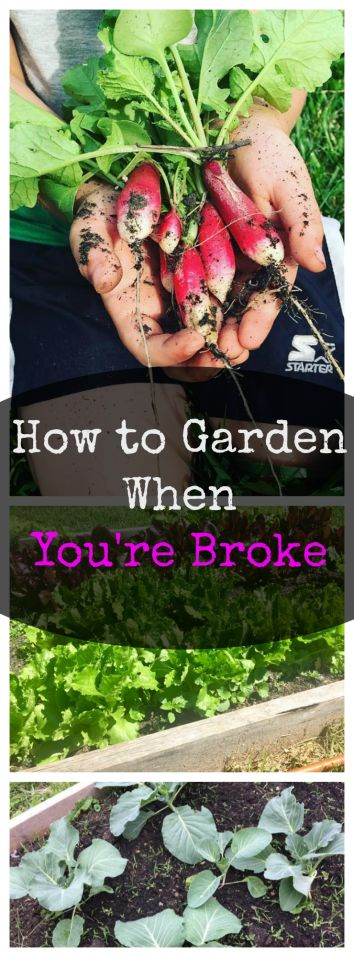 7 Ways to Save Money Gardening When You're Broke. Easy gardening tips