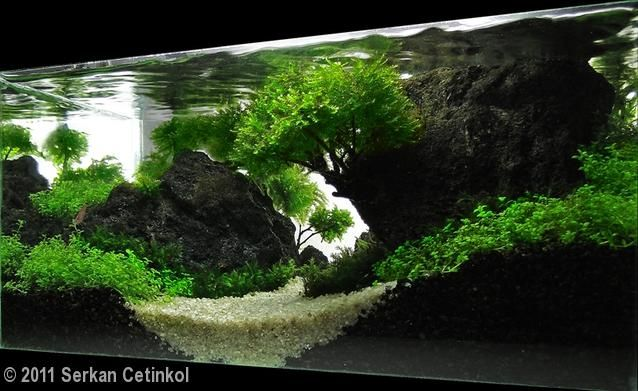 I love the height and use of negative space in this scape for Lava rock fish tank