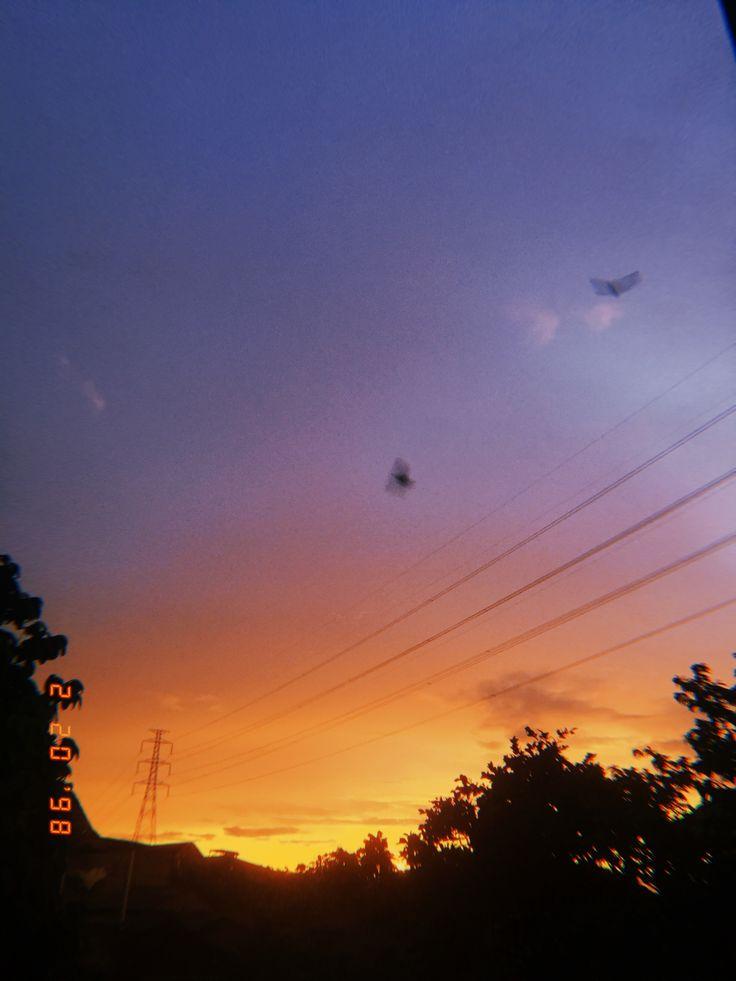 #sunset #love #peace #birds #yellow #tree