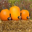 Interested in learning how to make your own Pumpkin Keg Tap? We're here to help with all the gear you need plus step-by-step instructions.     https://www.kegworks.com/blog/how-to-make-a-diy-pumpkin-keg-tap-in-minutes/     #homebrewing     www.homebrewing.org