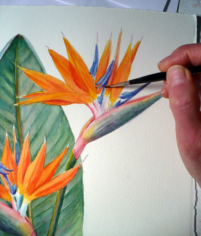 Bird Of Paradise Botanical Painting Strelitzia Reginae Botanical Painting Paradise Painting Loose Watercolor Paintings
