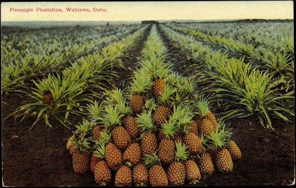 I would visit the Dole Pineapple Plantation in Hawaii & eat some Freshly picked Pineapple! #pinhawaii