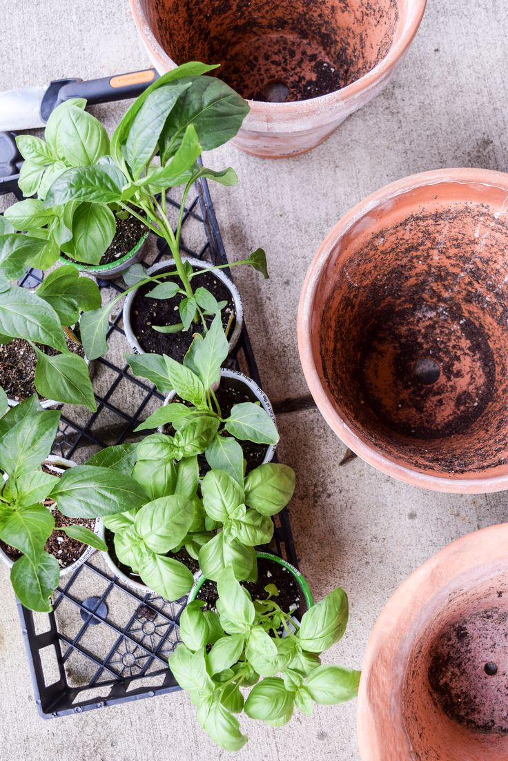 How To Start A Patio Herb And Vegetable Garden