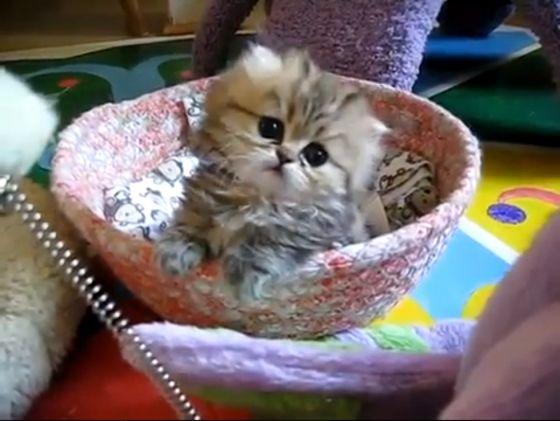 <3Kitty Cat, Head Tilt, 37 Head, Animal Videos, Sweets Kittens, Baby Kitty, Box Pies, Cat Videos, Cat Lady