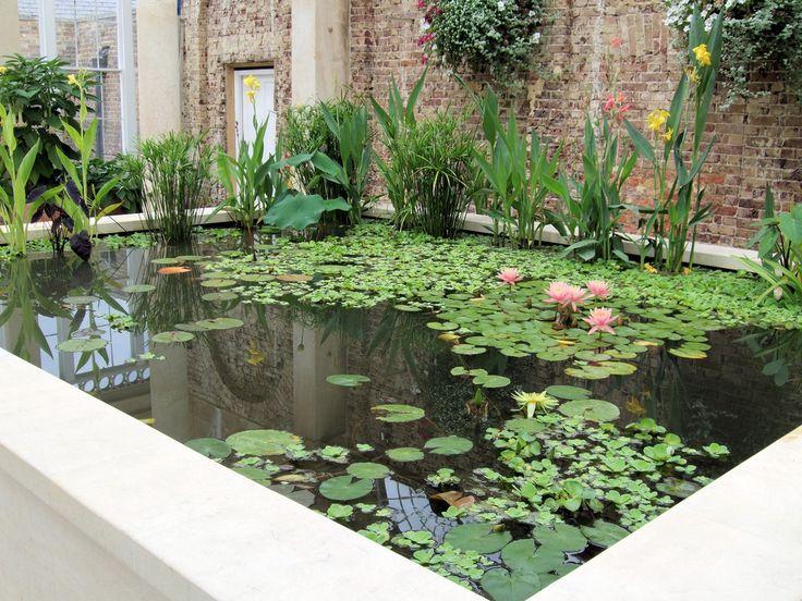 ARTE Y JARDINERÍA DISEÑO DE JARDINES: Plantas de estanques acuáticos