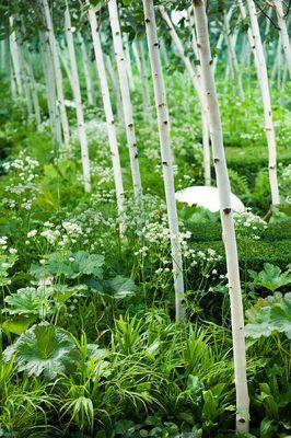 Betula utilis 'Doorenbos'. HAMPTON COURT FLOWER SHOW 2008: FOREST GARDEN DESIGNED BY IVAN TUCKER - WOODLAND PLANTING WITH BETULA UTILIS VAR JACQUEMONTII 'DOORENBOS' AND MIRRORS. WHITE BOULDER SEAT