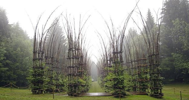 Italy's Cattedrale Vegetale - A real cathedral... just made of trees!!! I had never seen or heard of it before.