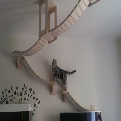 """Über 1.000 Ideen zu """"Catwalk Katzen auf Pinterest ..."""