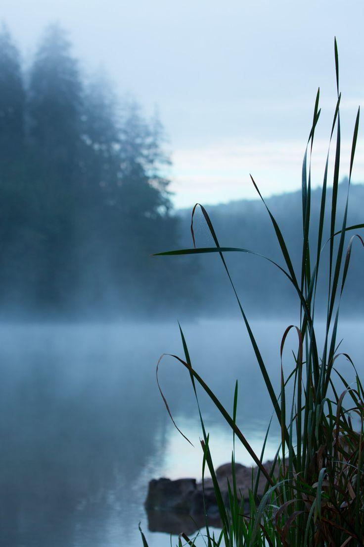 * Misty Morning * - null