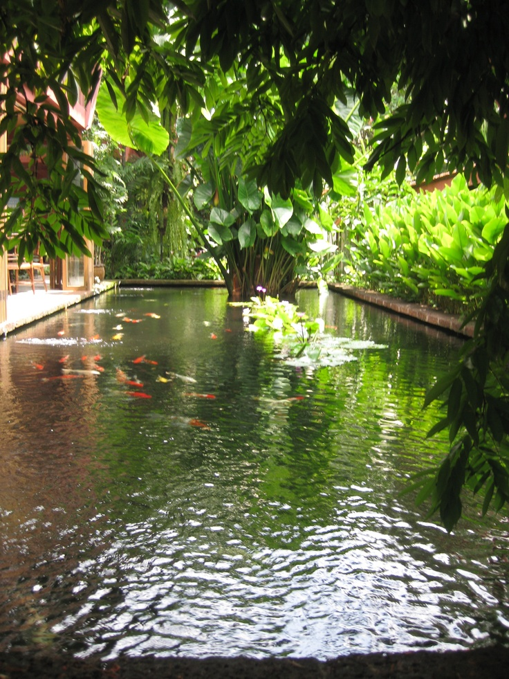 50 best images about beautiful koi ponds on pinterest for Koi fish pond backyard