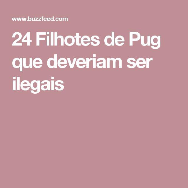 24 Filhotes de Pug que deveriam ser ilegais
