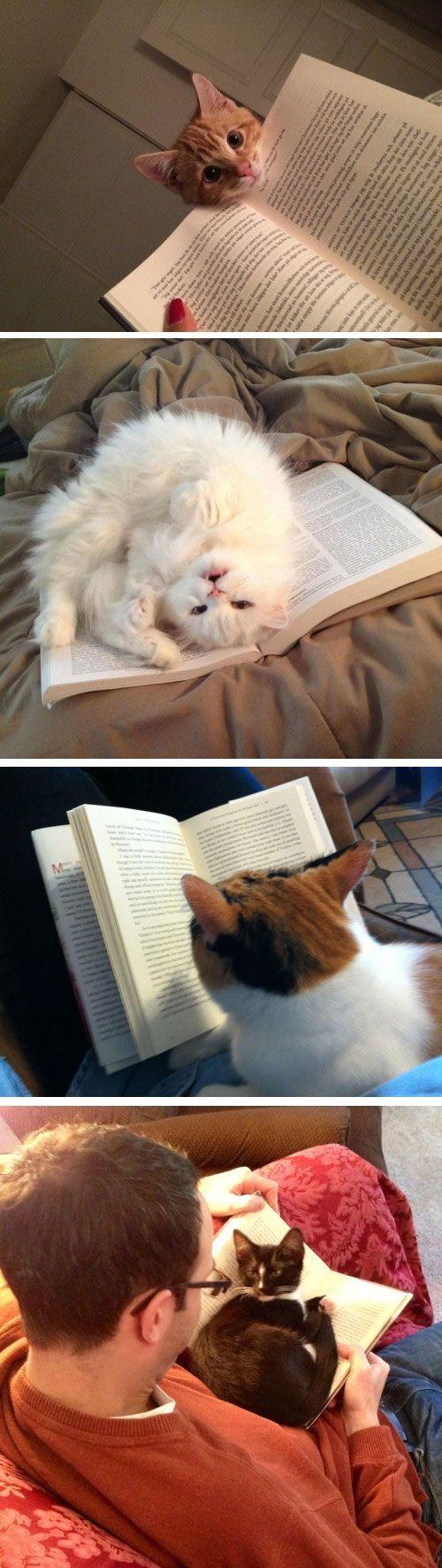 La difficulté de lire avec un chat