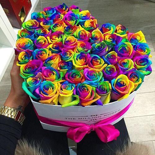 rose, flowers, and rainbow kép
