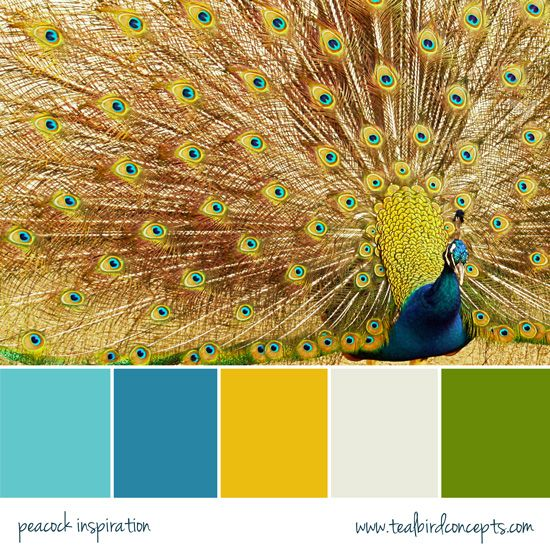 38 Best Paint Color Schemes Celery Green Images On: Best 25+ Peacock Color Scheme Ideas On Pinterest