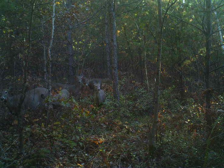 Deer-Jackson County