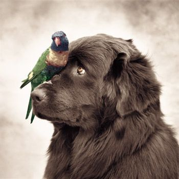 Rachel Hale - amazing animal photographer