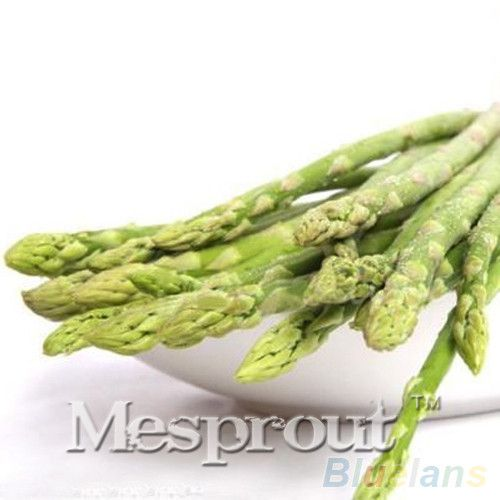Asparagus Seeds Home Small Bamboo Luck Bamboo Seed for Home Flower Pot Plants 50 Particles / lot