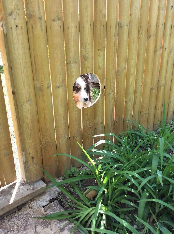 Peek A Bark Fence It S A Dogs Life Fence Dog Fence Dogs
