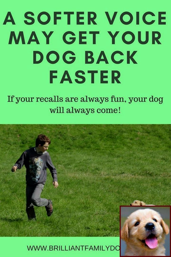 1 Have Dog Behavior Problems Learn About Dog Unusual Behavior And