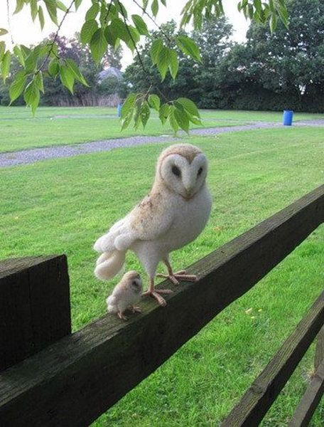 Very Beautiful Little Baby and Mama Owl