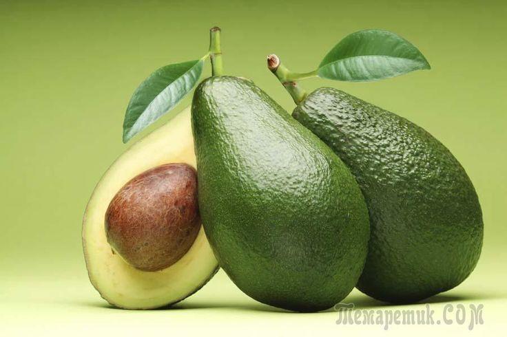 Выращивание авокадо с плодами из косточки в домашних условиях