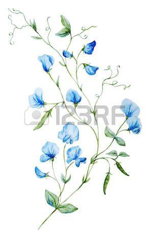 Gyönyörű vektor kép szép akvarell virágok photo