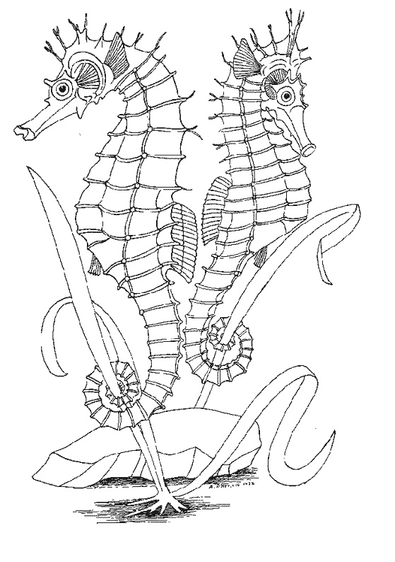 http://www.dididou.fr/coloriage/animaux/mer/hippocampe2.gif