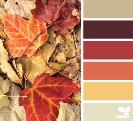 fallen hues | tan, maroon, red, orange, yellow, beige | natural // jewelled // chromatic palette