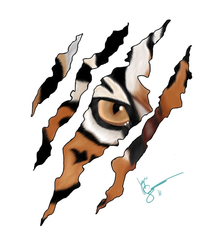 Tiger Scratch 2 by ~Maineac92 on deviantART
