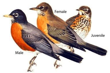 Male, female and juvenile