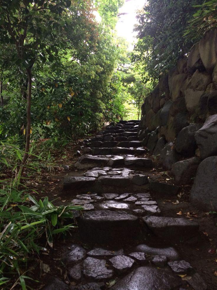 雨あがりのお散歩