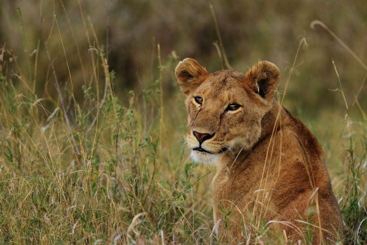Explore such a land of extraordinary beauty by booking for #TanzaniaSafari. Know more @ http://northernmasailandsafaris.com/