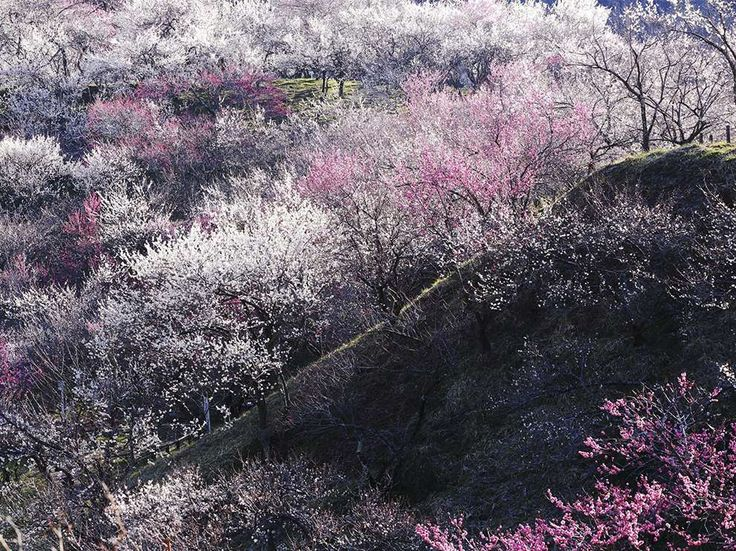 Mount Takao, Japan