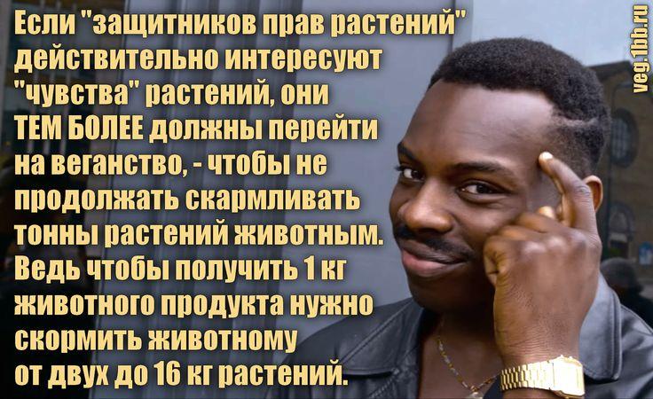 """Но ведь растениям тоже больно!"" - http://veg.1bb.ru/viewtopic.php?id=35#p68"