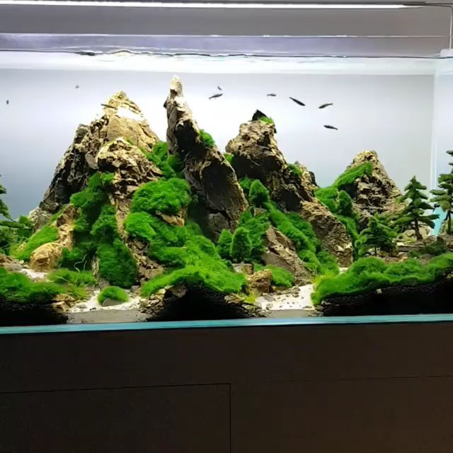 Freshwater Aquarium Rock Mountain Style With Cladophora Moss