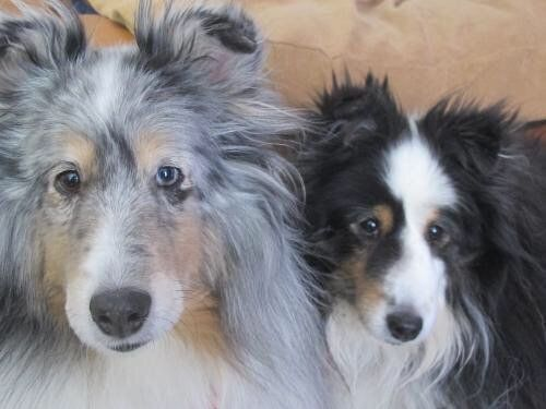 Molly and Itsy needs a Home! #DoggyRescue