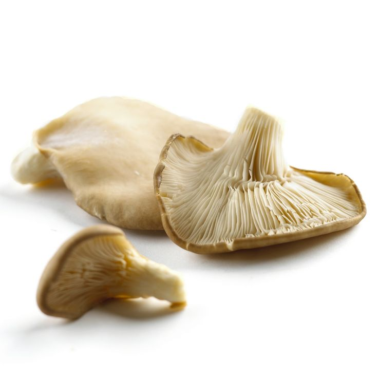 Simply Fresh Fruit distribute mushrooms throughout Melbourne. The clam like OYSTER MUSHROOM that grows on trees in nature. Not long after the first rains of the season, the snow-ash petal-like beginnings of oyster Mushrooms c