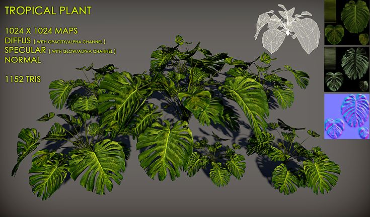 Free Tropical plant Pack by Nobiax.deviantart.com on @deviantART