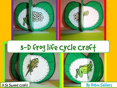 3D Frog Life Cycle craftivity by Robin Sellers