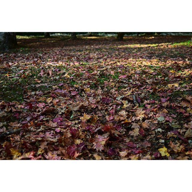 【yuchi_sakai】さんのInstagramをピンしています。 《* 🌏🍁🍂落ち葉🍁 ∵ ∵ 北海道の短い秋‼(^^)v  ローアングルからの落ち葉 * (*^^*) ∵ ∵  #落ち葉 #紅葉 #絶景 #風景 #自然 #景色 #森林 #福原山荘 #然別峡 #鹿追町 #viewpoint #special_spot #landscape #ig_nature #ファインダー越しの私の世界 #写真撮ってる人と繋がりたい #写真好きな人と繋がりたい #hokkaido #hokkaidolikers #ig_japan #loves_japan #nikon #d5300》