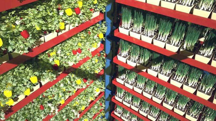 Dahir Insaat  Greenhouse